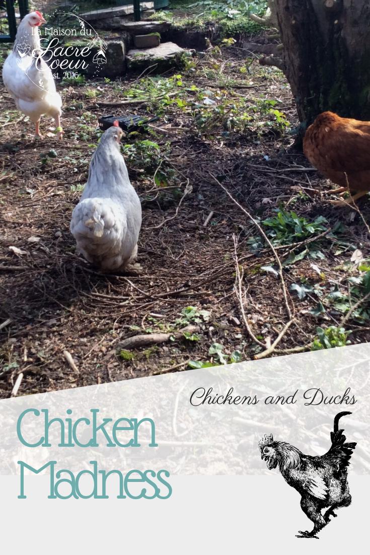 Chicken Madness